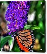 015 Making Things New Via The Butterfly Series Acrylic Print