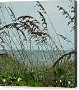 019 Sea Oats Acrylic Print