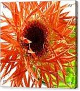 0690c-009 Acrylic Print