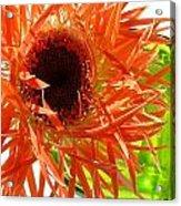 0690c-013 Acrylic Print