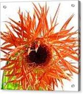 0690c-017 Acrylic Print