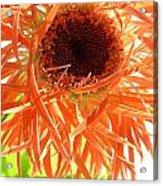 0692c-009 Acrylic Print