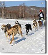 2010 Limited North American Sled Dog Race Acrylic Print