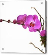 A Close-up Of An Orchid Branch Acrylic Print