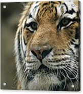 A Close View Of The Face Of Khuntami Acrylic Print