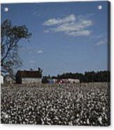 A Cotton Field Surrounds A Small Farm Acrylic Print