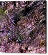 Abstract 85 Acrylic Print