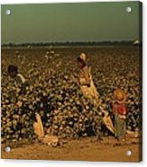 African Americans Picking Cotton Acrylic Print