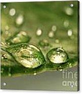 After The Rain Acrylic Print by Sandra Cunningham
