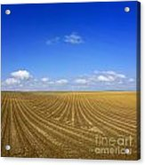 Agricultural Landscape Acrylic Print