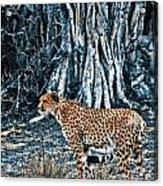Alert Cheetah Acrylic Print by Darcy Michaelchuk