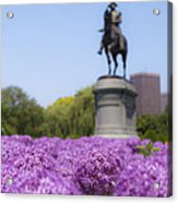 Allium Flower At The Boston Common Acrylic Print