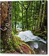 Along The Trail Acrylic Print