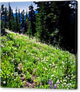 Alpine Meadow Vii At Mount Rainier Acrylic Print