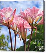 Amaryllis Belladonna Acrylic Print