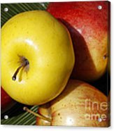 An Apple A Day Acrylic Print by Denise Pohl