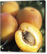 Apricots Acrylic Print by Veronique Leplat