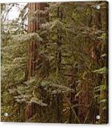 Ashland Oregon Acrylic Print
