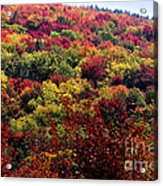 Autumn Along The Highland Scenic Highway Acrylic Print
