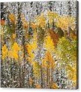Autumn Patchwork Acrylic Print