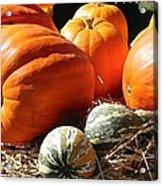 Autumn Study Acrylic Print
