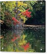 Autumn Tree Reflections Acrylic Print