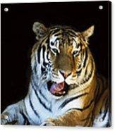 Awaking Tiger Acrylic Print