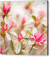 Azalea Acrylic Print