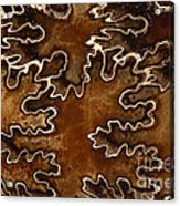 Baculites Fossil Acrylic Print