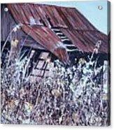 Barn in Sunlight Acrylic Print