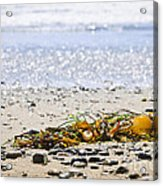 Beach Detail On Pacific Ocean Coast Acrylic Print by Elena Elisseeva