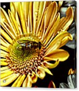 Bee Acrylic Print by Kelly Rader