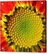 Bee's View Acrylic Print