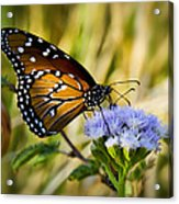 Behold The Queen Acrylic Print