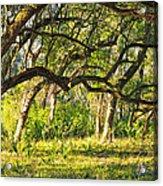 Bent Trees Acrylic Print