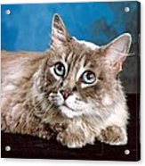 Big Blue Eyes Acrylic Print