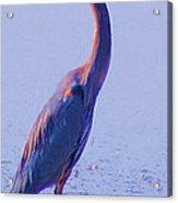 Big Blue Heron At Lake Side Acrylic Print