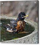 Bird Bath Fun Time Acrylic Print
