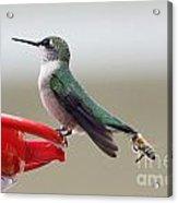 Birds And Bee's Acrylic Print