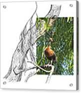 Black-bellied Whistling-duck Acrylic Print