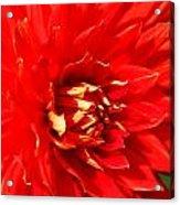 Blazing Red Acrylic Print