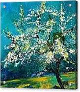 Blooming Appletree Acrylic Print