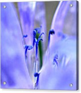 Blue Weed Acrylic Print