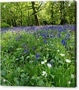 Bluebell Woods  Acrylic Print