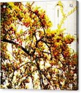 Branch Of Heaven Acrylic Print