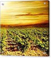 Bright Sunset At Vineyard Acrylic Print