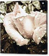 Bring May Flowers Acrylic Print