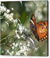 Bubble Fly Acrylic Print by Steven Richardson