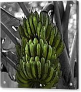 Bunch Of Bananas Acrylic Print
