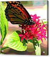 Butterfly Flowers Acrylic Print